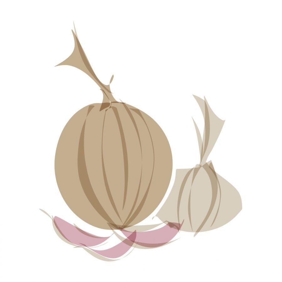 onion garlic digital food illustration