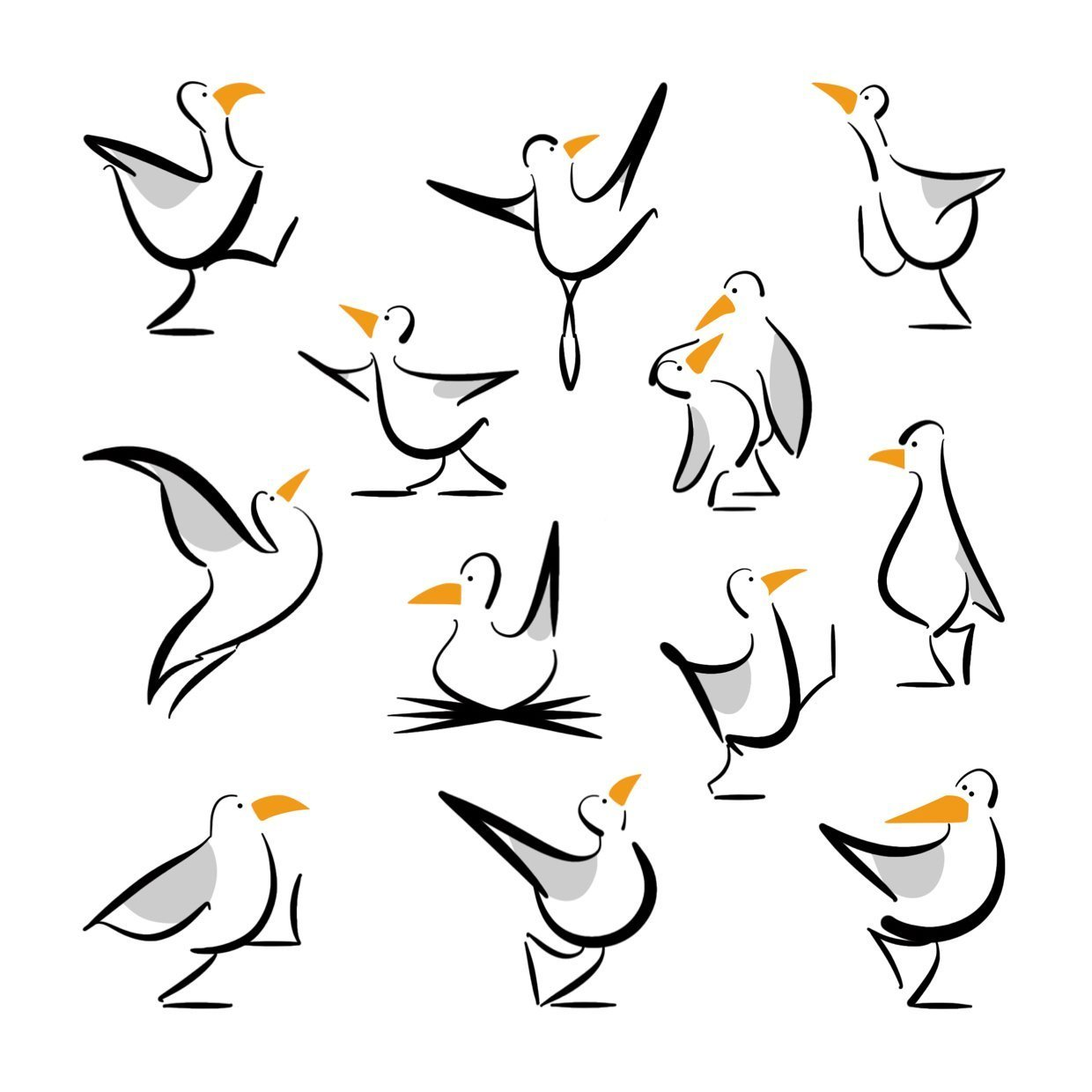 seagull illustrations lucy monkman